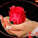 Для тебя красная розочка