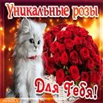 Анимационная открытка корзина роз