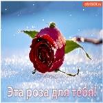 Эта роза для тебя!