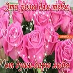 Эти розы для тебя, от души дарю любя!
