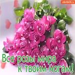 Красивые розы к твоим ногам