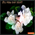 Красивые белые розы для тебя