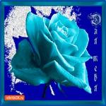 Синяя роза для тебя