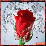 Тебе волшебная роза