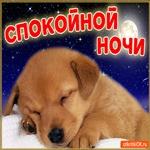 Доброй ночи пожелаю