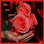 Эти розы с любовью от меня!
