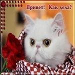 Красивая открытка Привет