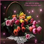 Красивые цветы для красивой женщине