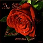 Красивые розы вам милые женщины