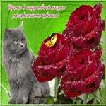 Классные розы тебе от всей души!
