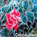 Поздравляем всех с приближением зимы