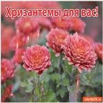 Прекрасные цветы для красивой женщины
