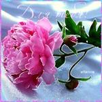 Красивые цветы тебе на счастье