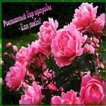 Цветы для красивой женщине